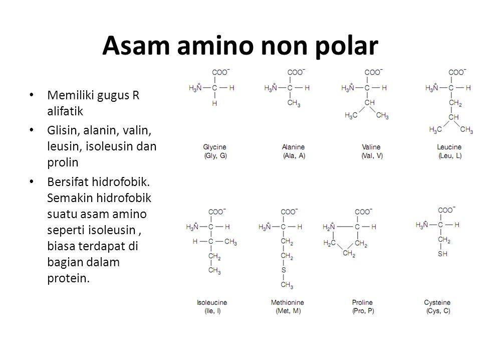 Asam amino non polar Memiliki gugus R alifatik