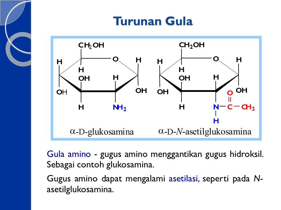 Turunan Gula a - glukosamina asetilglukosamina