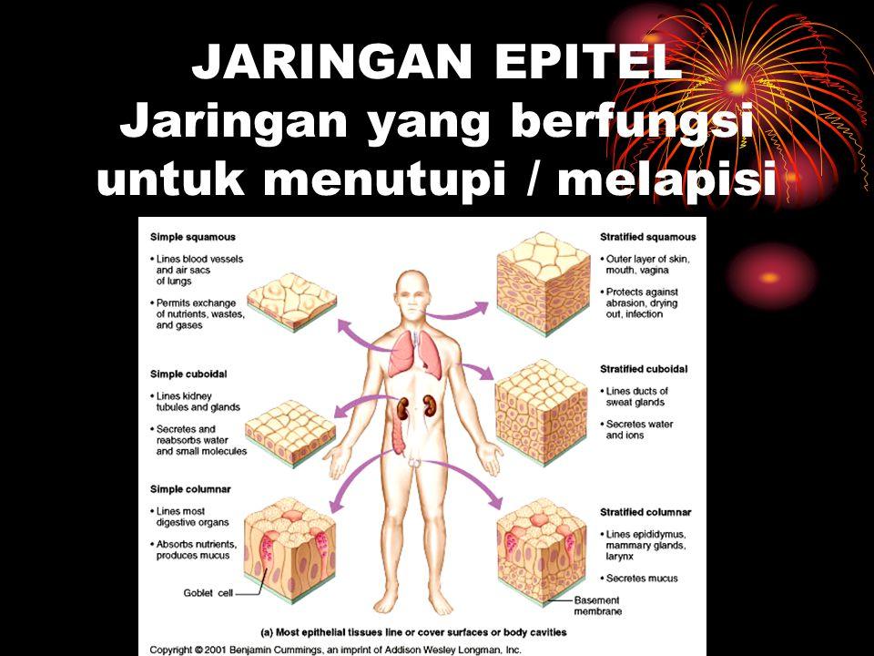 JARINGAN EPITEL Jaringan yang berfungsi untuk menutupi / melapisi tubuh
