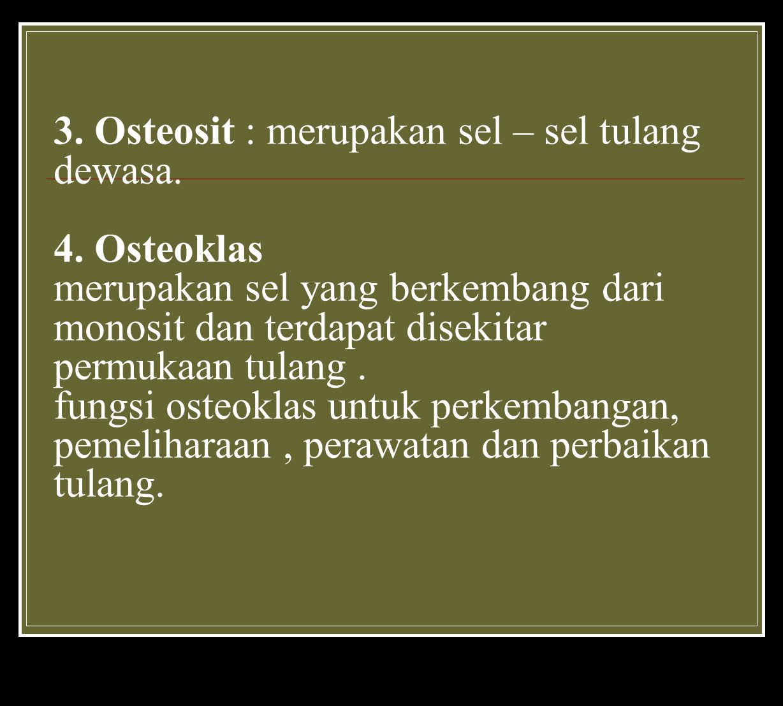 3. Osteosit : merupakan sel – sel tulang dewasa. 4