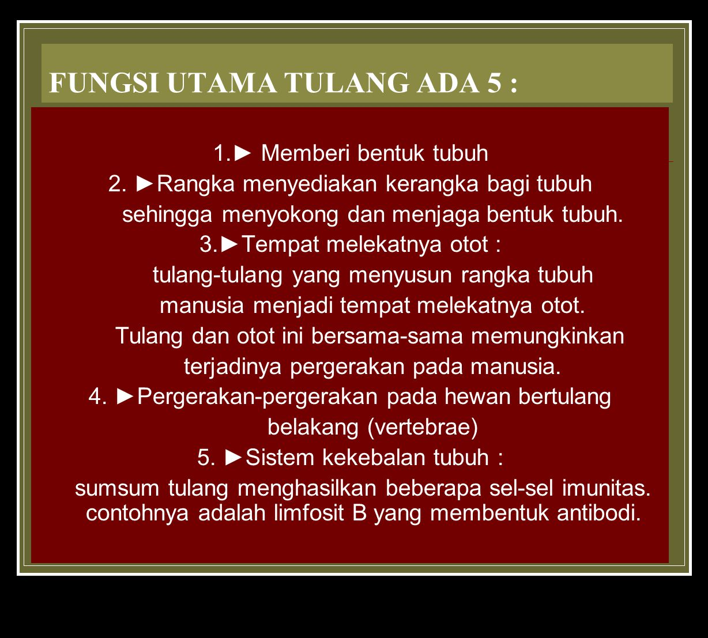 FUNGSI UTAMA TULANG ADA 5 :