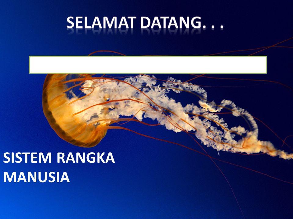 SELAMAT DATANG. . . SISTEM RANGKA MANUSIA