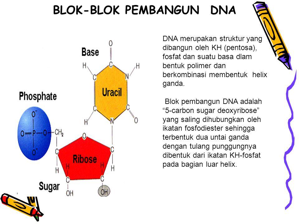 BLOK-BLOK PEMBANGUN DNA