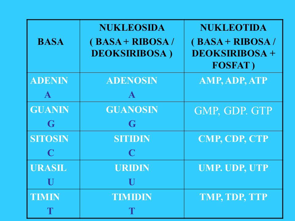 GMP, GDP. GTP BASA NUKLEOSIDA ( BASA + RIBOSA / DEOKSIRIBOSA )