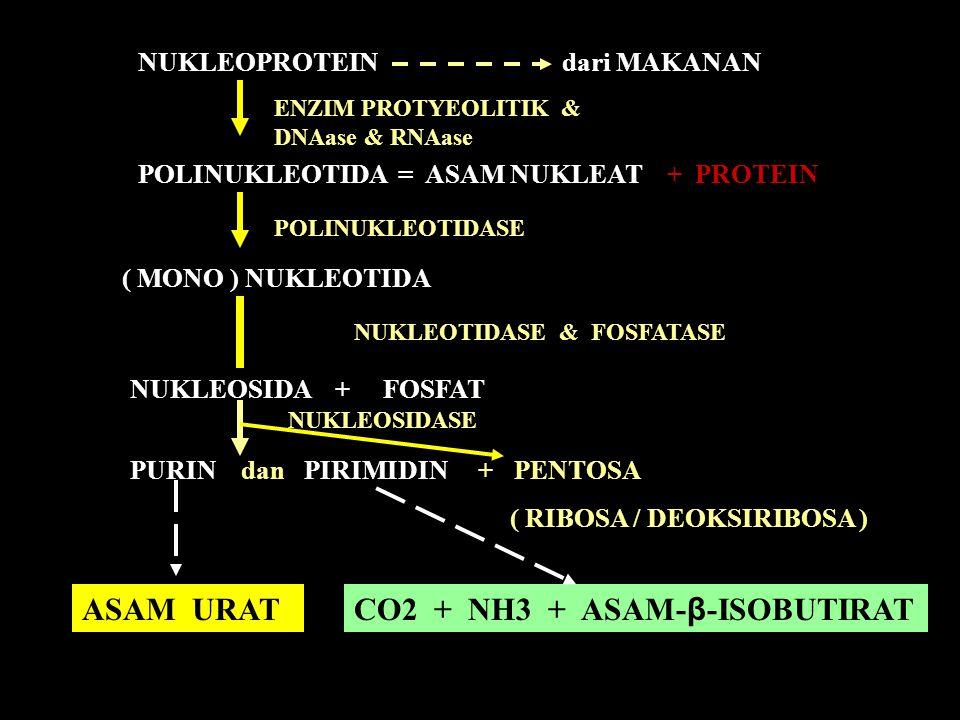CO2 + NH3 + ASAM-β-ISOBUTIRAT