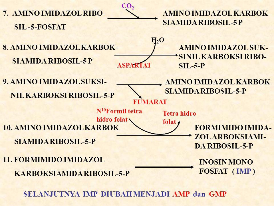 AMINO IMIDAZOL KARBOK-SIAMIDA RIBOSIL-5 P
