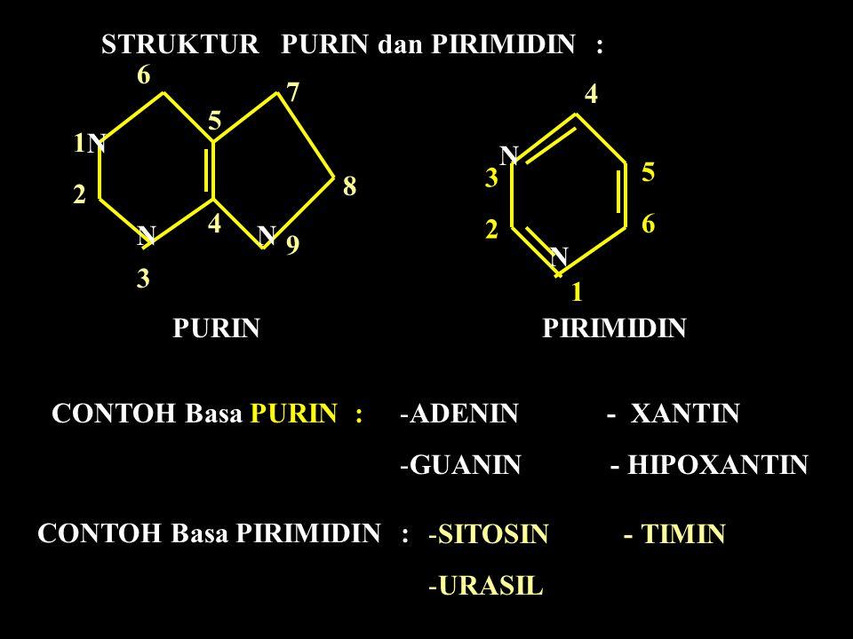 STRUKTUR PURIN dan PIRIMIDIN :