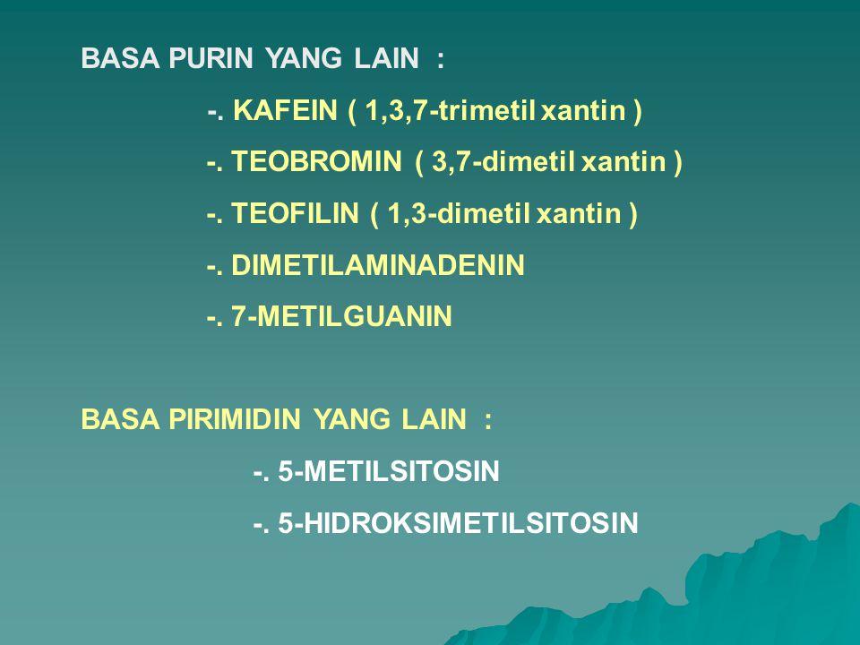 BASA PURIN YANG LAIN : -. KAFEIN ( 1,3,7-trimetil xantin ) -. TEOBROMIN ( 3,7-dimetil xantin ) -. TEOFILIN ( 1,3-dimetil xantin )