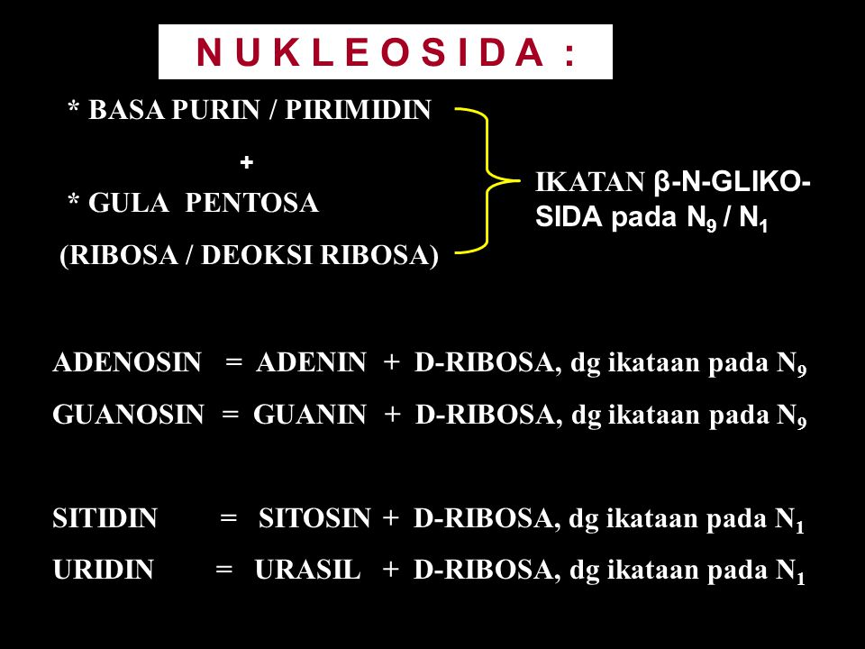 N U K L E O S I D A : * BASA PURIN / PIRIMIDIN
