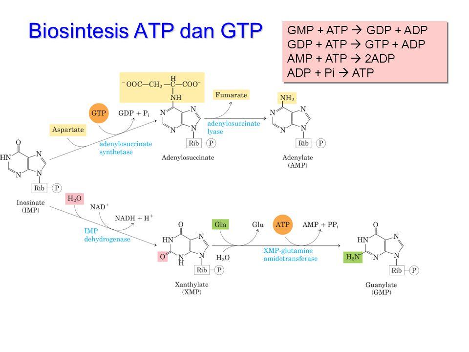 Biosintesis ATP dan GTP