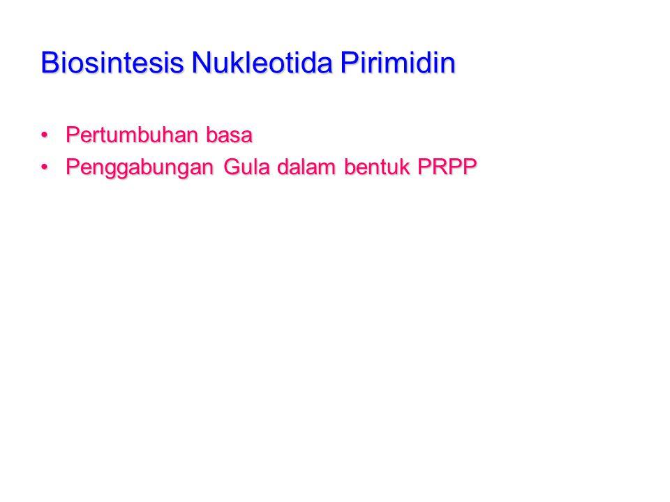 Biosintesis Nukleotida Pirimidin