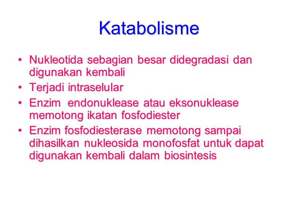 Katabolisme Nukleotida sebagian besar didegradasi dan digunakan kembali. Terjadi intraselular.