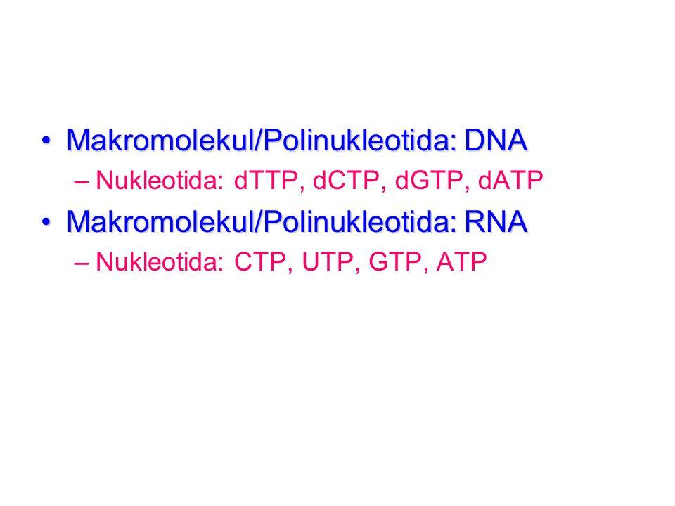 Makromolekul/Polinukleotida: DNA Makromolekul/Polinukleotida: RNA