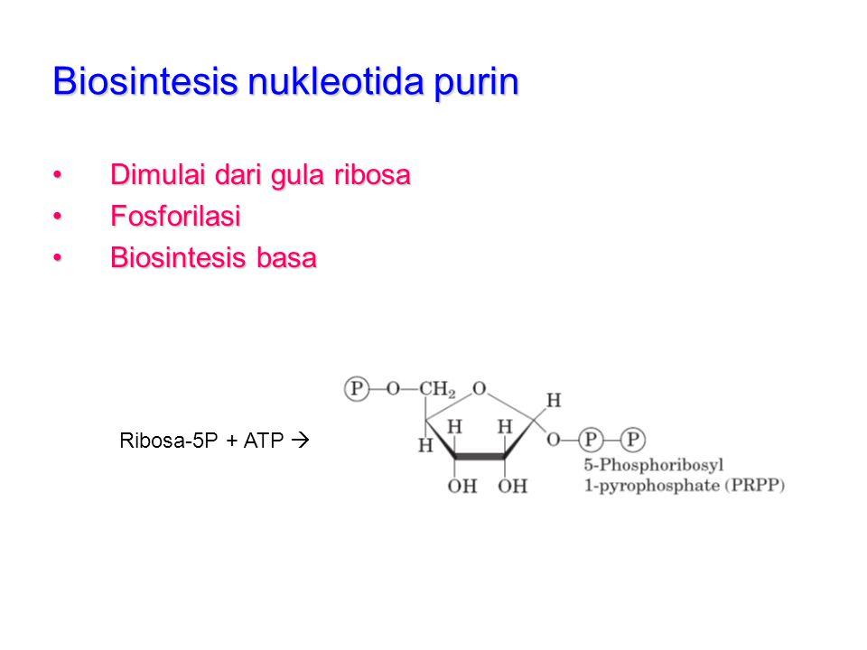 Biosintesis nukleotida purin
