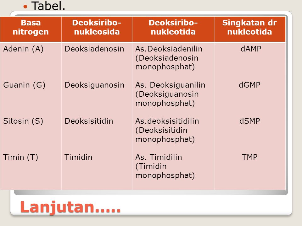 Deoksiribo-nukleosida Deoksiribo-nukleotida Singkatan dr nukleotida