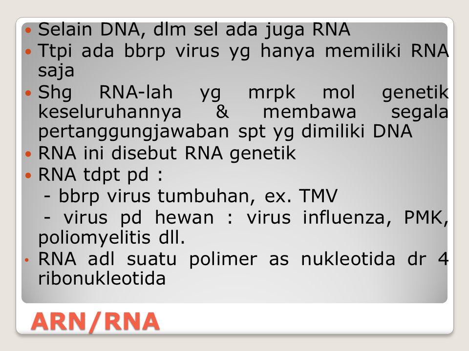 ARN/RNA Selain DNA, dlm sel ada juga RNA