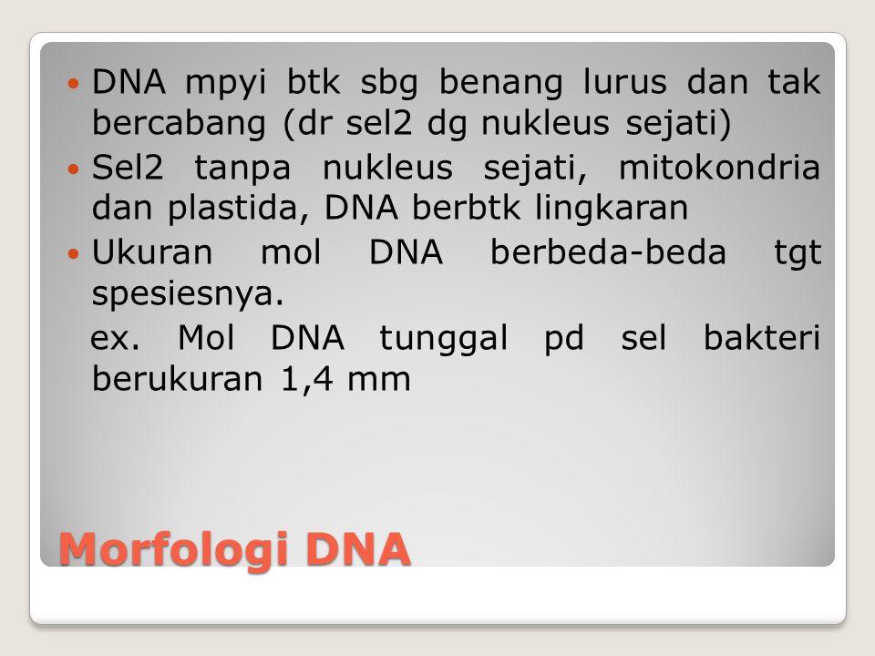 DNA mpyi btk sbg benang lurus dan tak bercabang (dr sel2 dg nukleus sejati)
