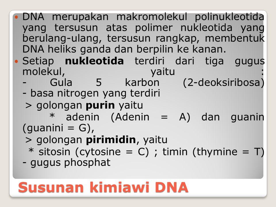 DNA merupakan makromolekul polinukleotida yang tersusun atas polimer nukleotida yang berulang-ulang, tersusun rangkap, membentuk DNA heliks ganda dan berpilin ke kanan.