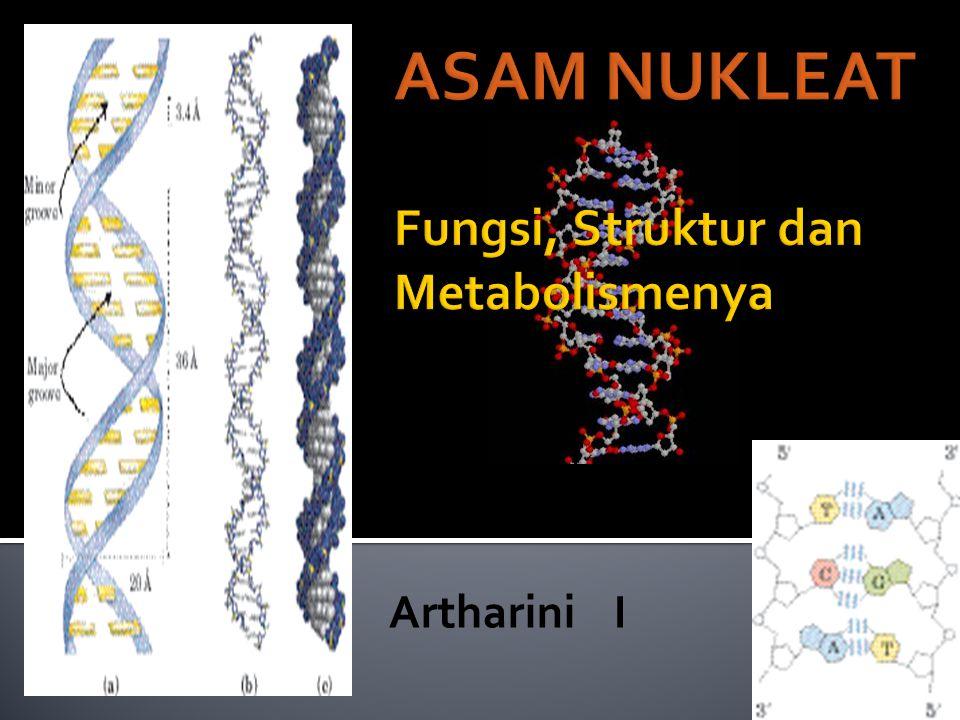 ASAM NUKLEAT Fungsi, Struktur dan Metabolismenya