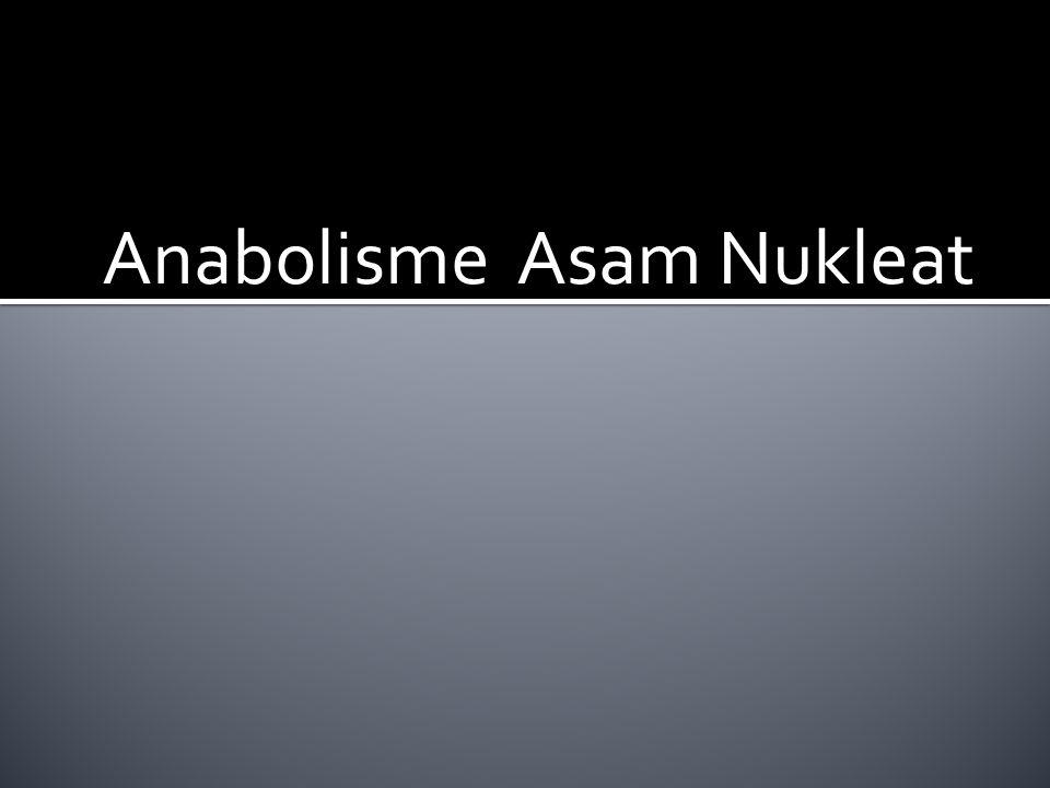 Anabolisme Asam Nukleat
