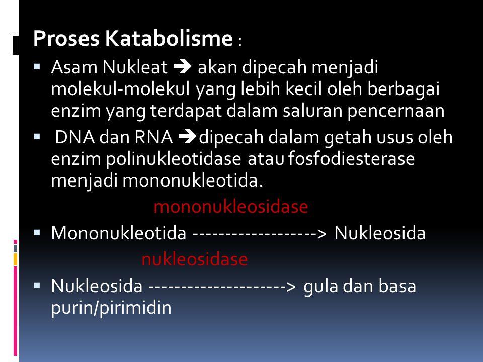 Proses Katabolisme :