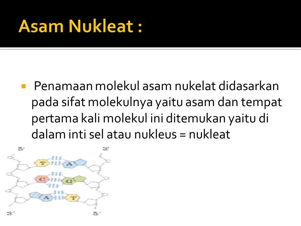 Asam Nukleat :