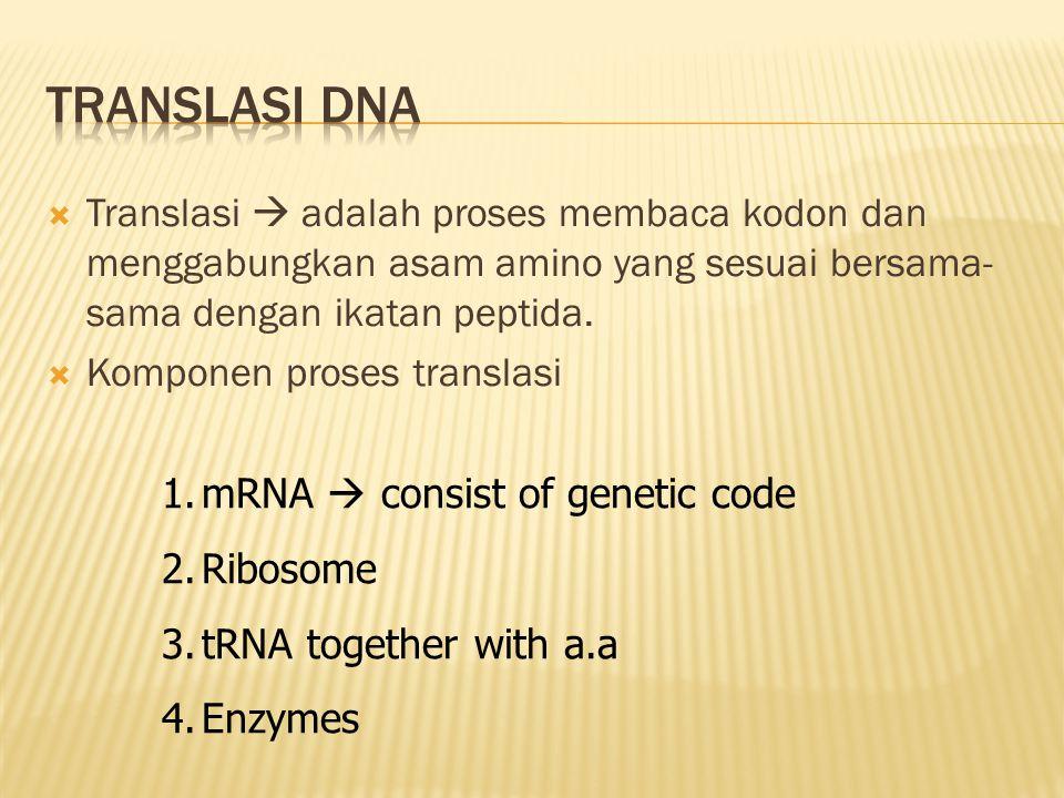 Translasi DNA Translasi  adalah proses membaca kodon dan menggabungkan asam amino yang sesuai bersama-sama dengan ikatan peptida.