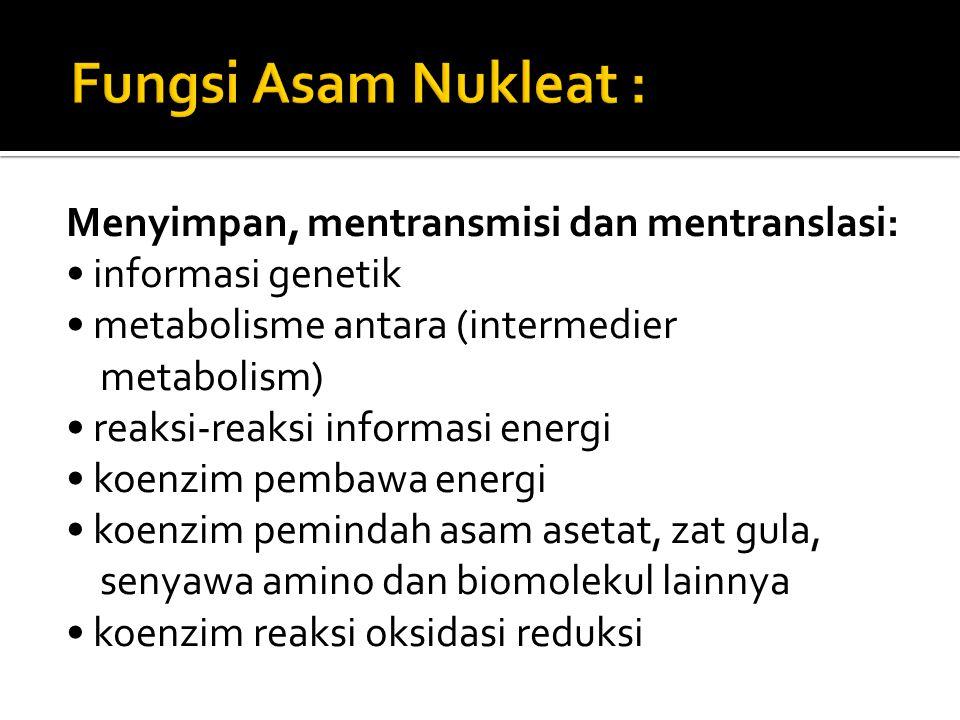 Fungsi Asam Nukleat : Menyimpan, mentransmisi dan mentranslasi: