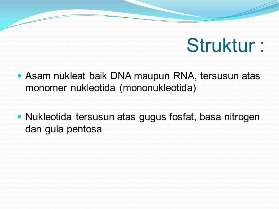 Struktur : Asam nukleat baik DNA maupun RNA, tersusun atas monomer nukleotida (mononukleotida)