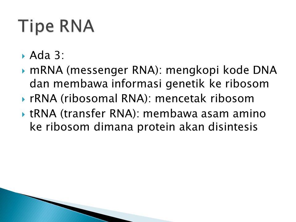 Tipe RNA Ada 3: mRNA (messenger RNA): mengkopi kode DNA dan membawa informasi genetik ke ribosom.