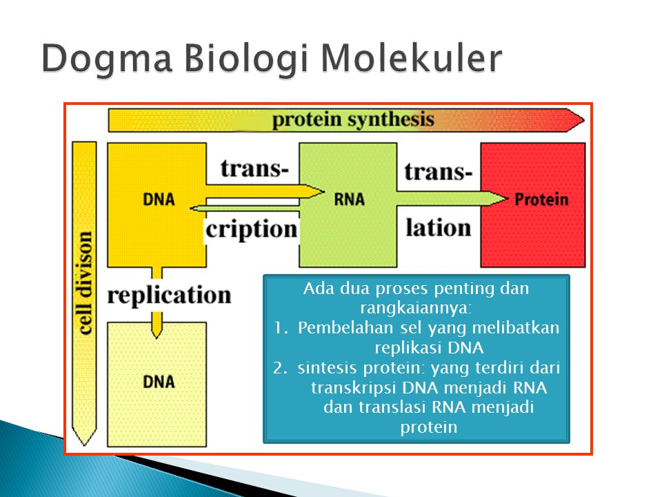 Dogma Biologi Molekuler