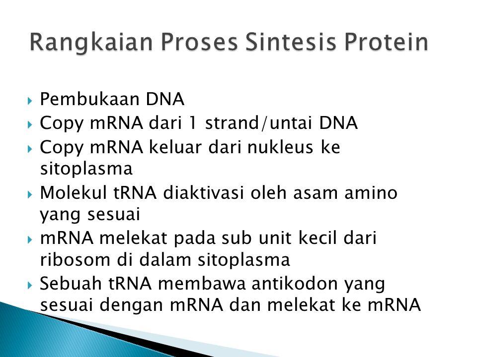 Rangkaian Proses Sintesis Protein