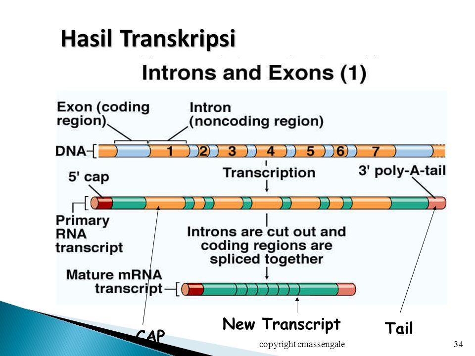 Hasil Transkripsi New Transcript Tail CAP copyright cmassengale