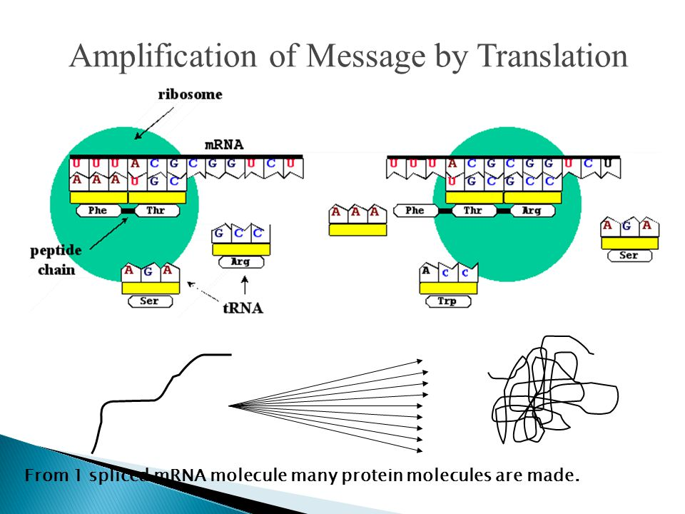 Amplification of Message by Translation