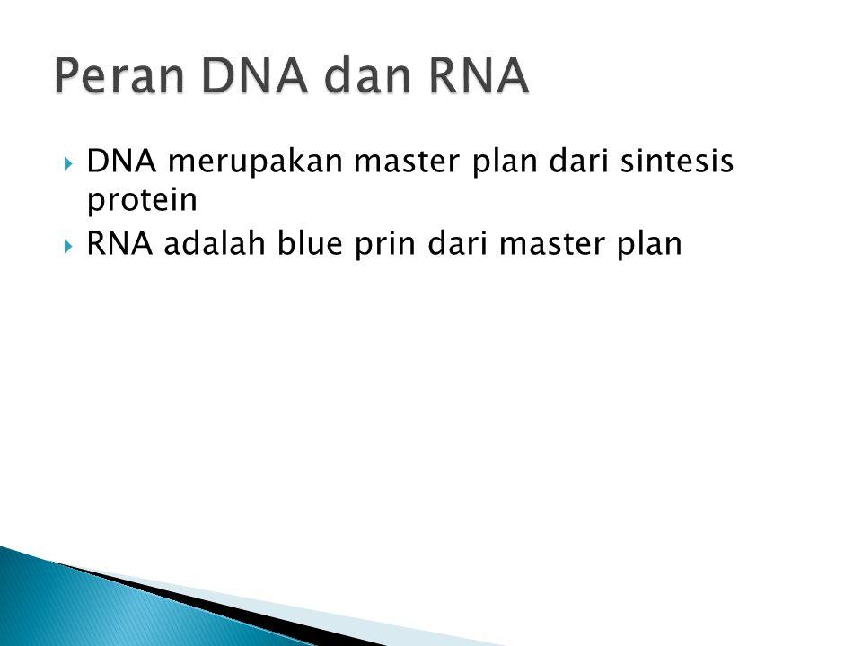 Peran DNA dan RNA DNA merupakan master plan dari sintesis protein