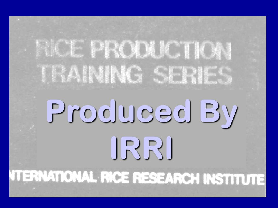 Produced By IRRI