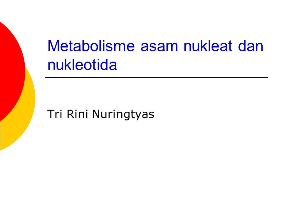 Metabolisme asam nukleat dan nukleotida