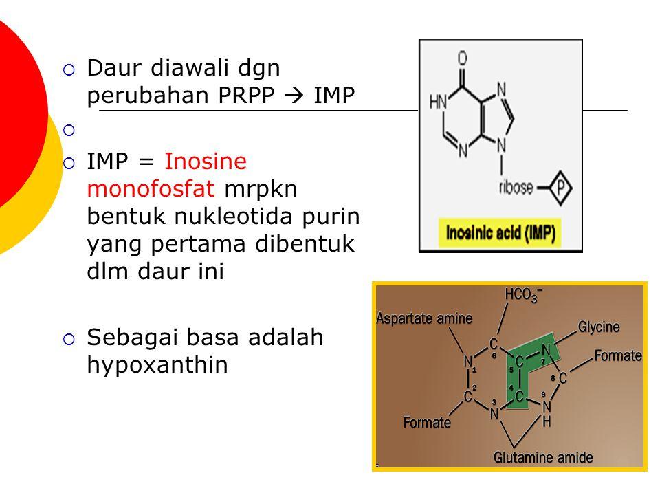 Daur diawali dgn perubahan PRPP  IMP