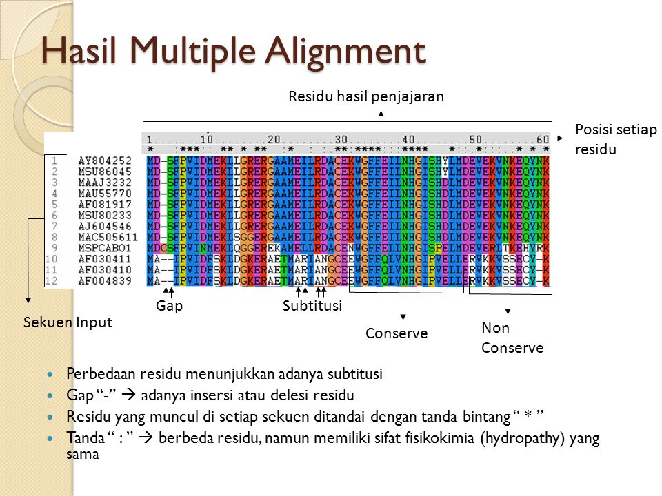Hasil Multiple Alignment