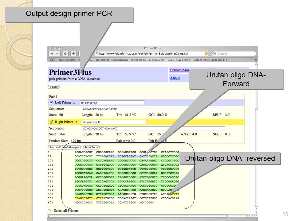 Output design primer PCR