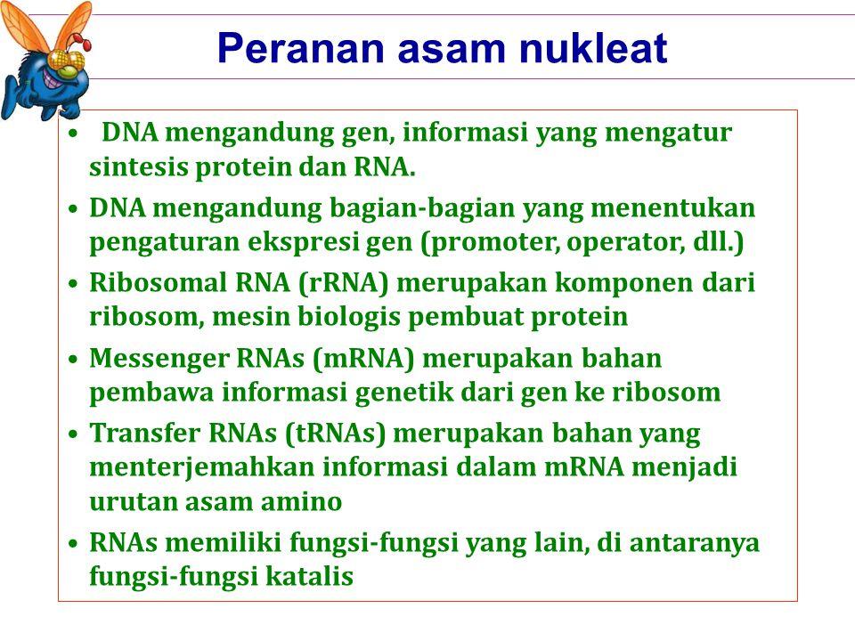 Peranan asam nukleat DNA mengandung gen, informasi yang mengatur sintesis protein dan RNA.