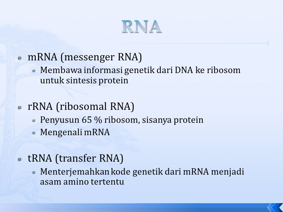 RNA mRNA (messenger RNA) rRNA (ribosomal RNA) tRNA (transfer RNA)