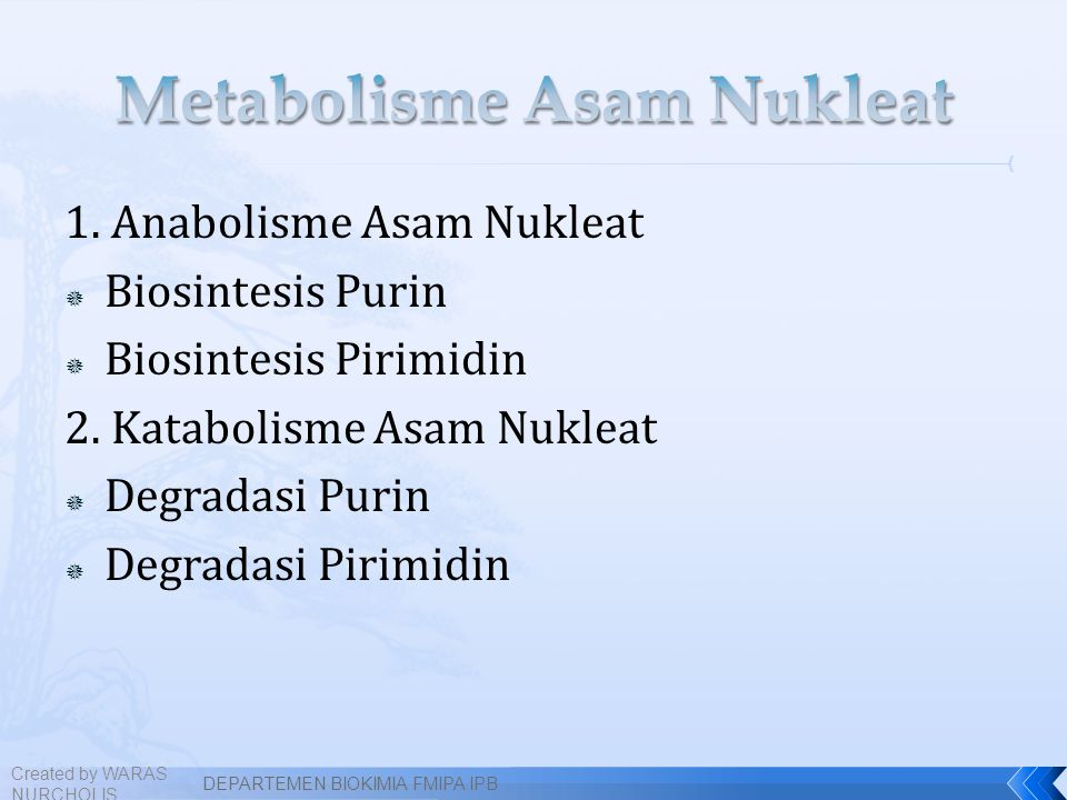 Metabolisme Asam Nukleat