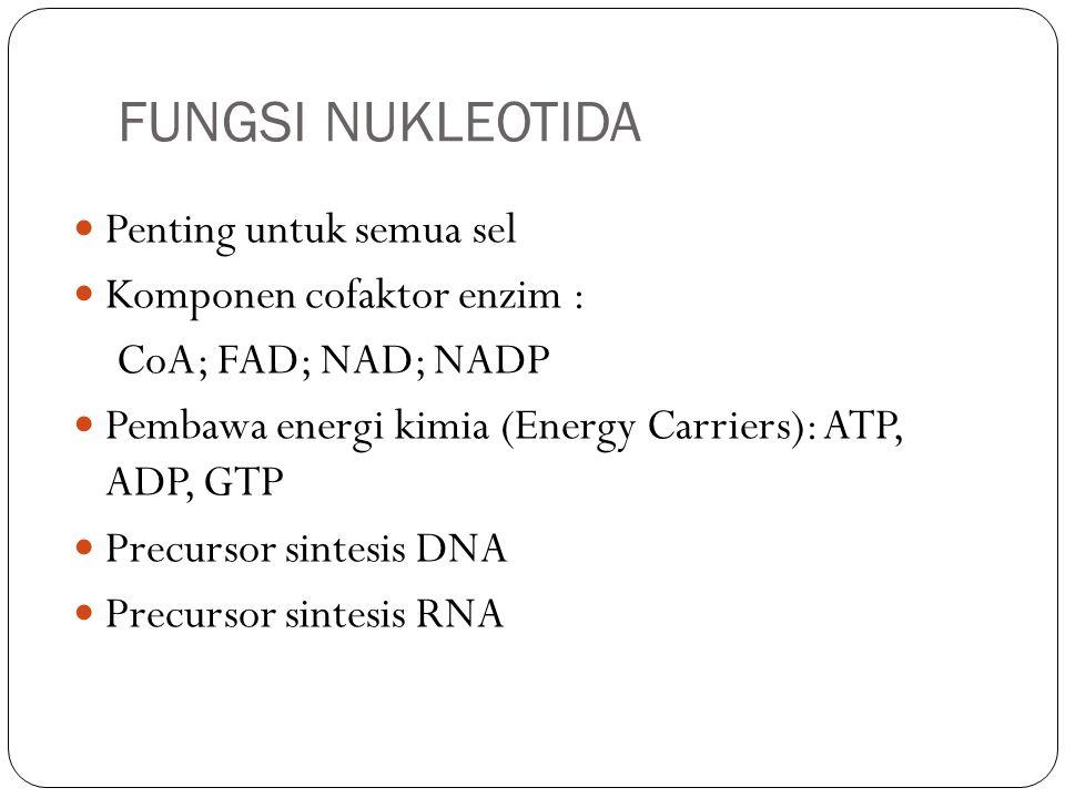 FUNGSI NUKLEOTIDA Penting untuk semua sel Komponen cofaktor enzim :