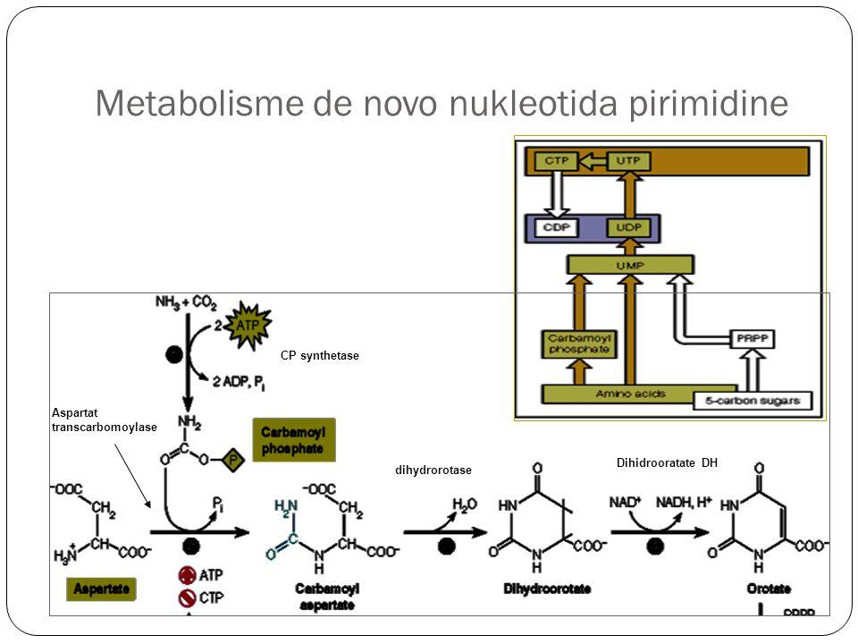 Metabolisme de novo nukleotida pirimidine