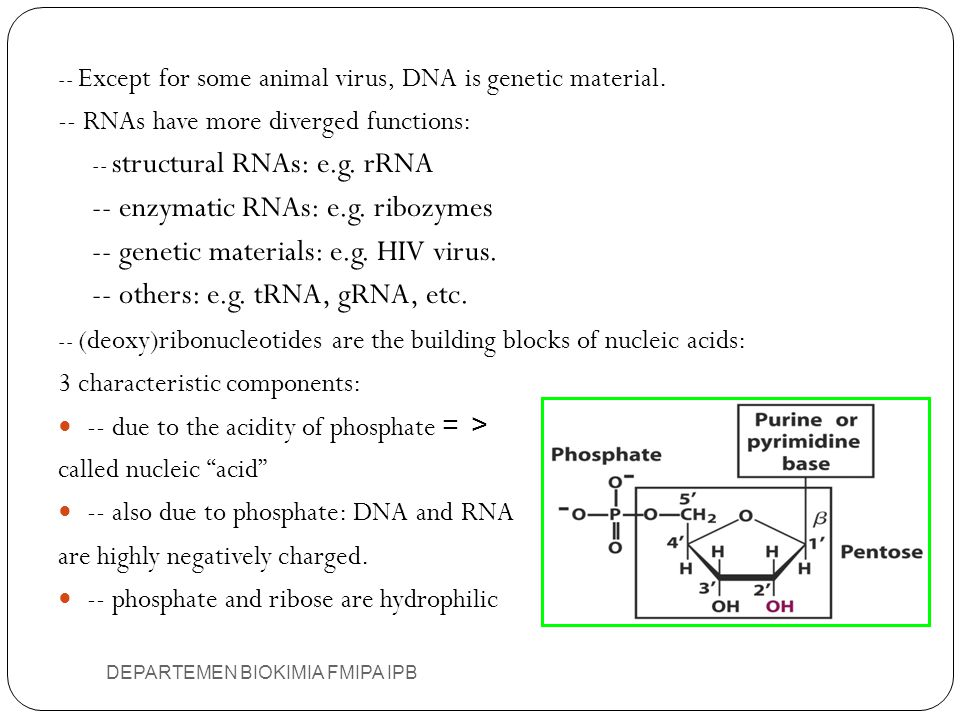 -- enzymatic RNAs: e.g. ribozymes