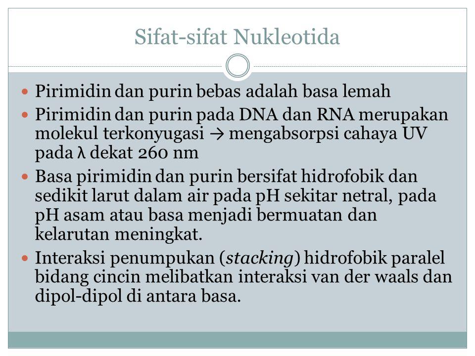 Sifat-sifat Nukleotida