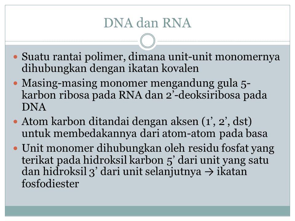 DNA dan RNA Suatu rantai polimer, dimana unit-unit monomernya dihubungkan dengan ikatan kovalen.