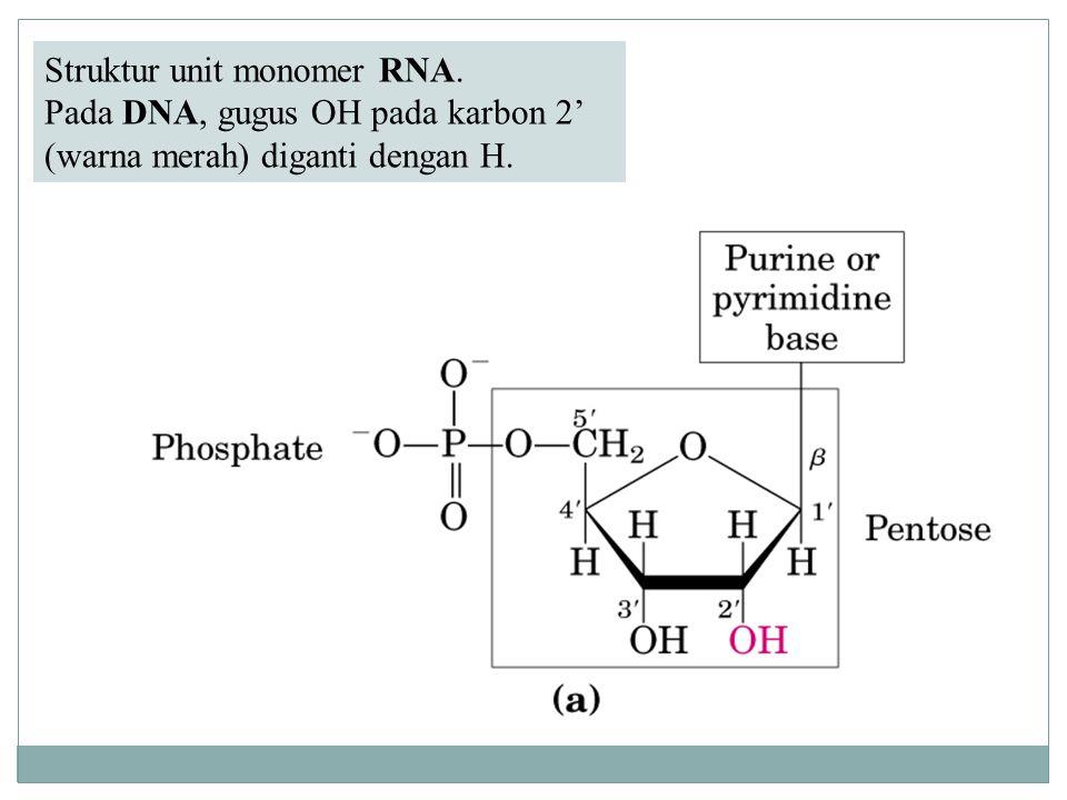 Struktur unit monomer RNA.