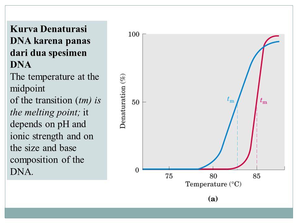 Kurva Denaturasi DNA karena panas dari dua spesimen DNA